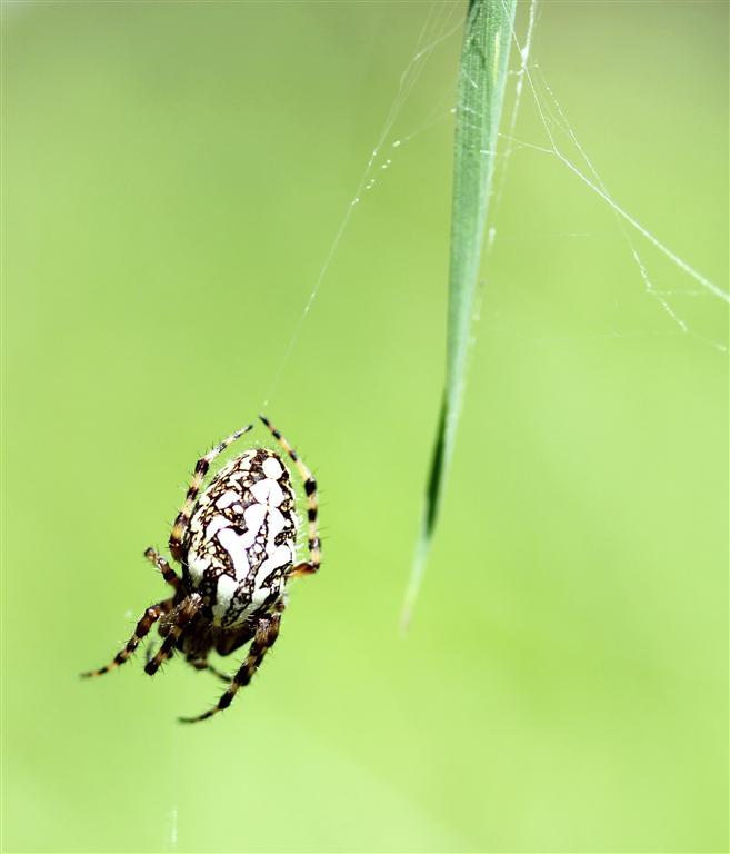Araignées (10) (Medium)