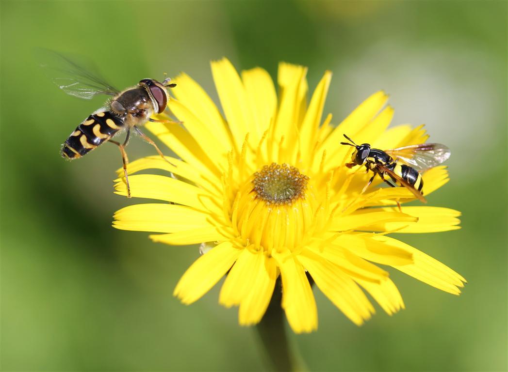 Insectes (2) (Medium)