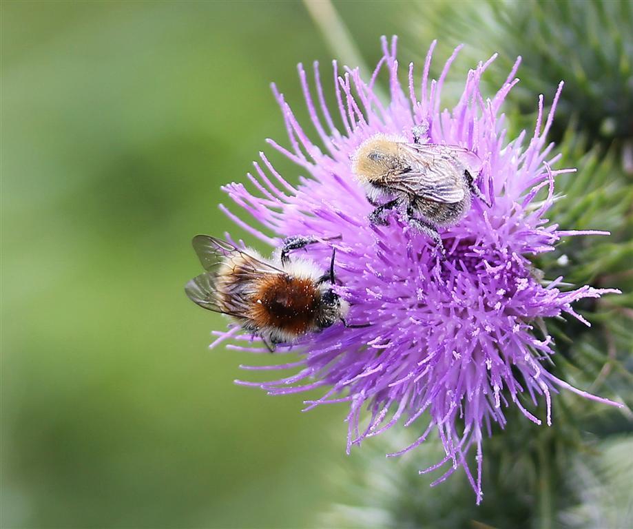 Insectes (7) (Medium)